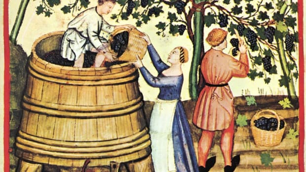Grape Harvest from the Tacuinum Sanitatis