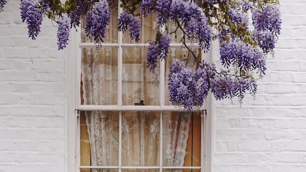 window with purple flowers