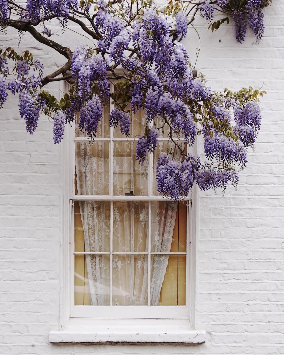 window with purple flowers